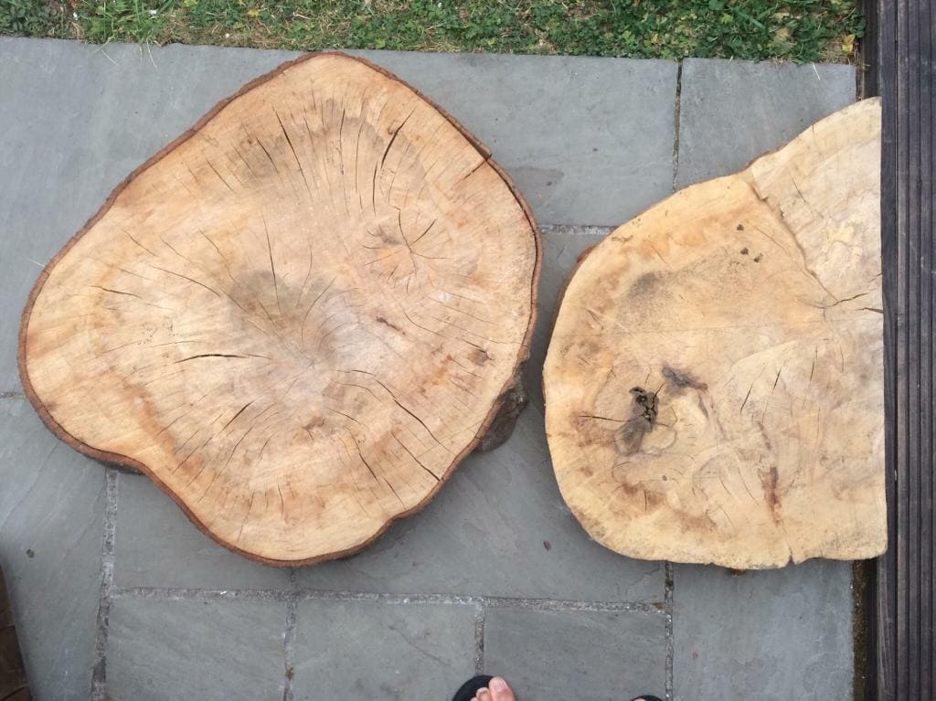 gỗ dẻ gai thuộc nhóm mấy
