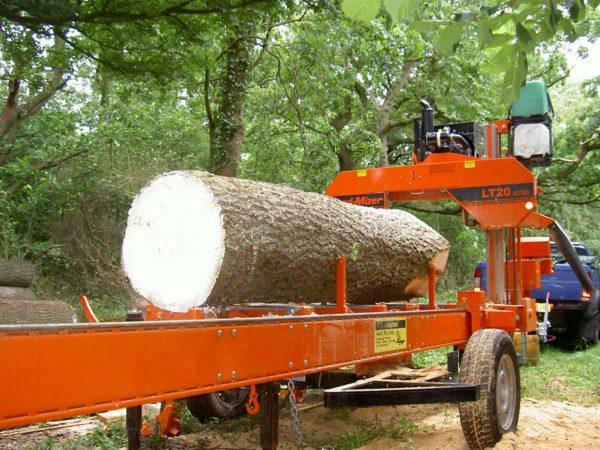 gỗ sồi trắng