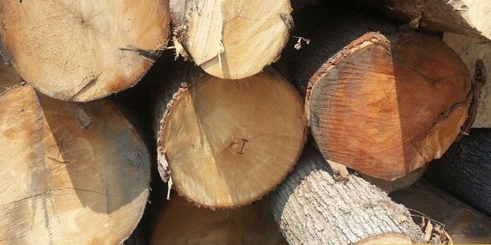 bán gỗ Sồi Trắng