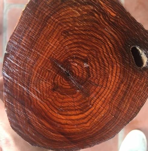 bán gỗ Thông Đỏ