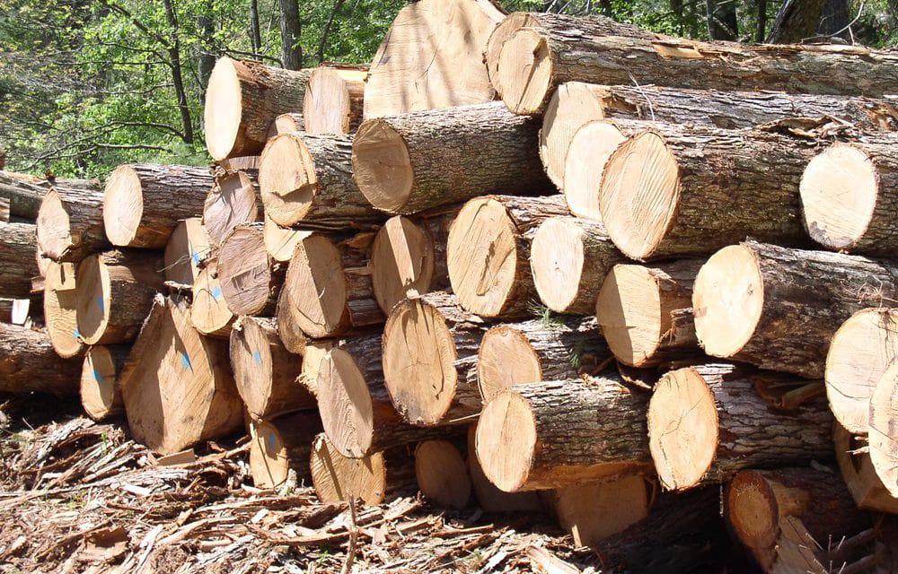 bán gỗ thông