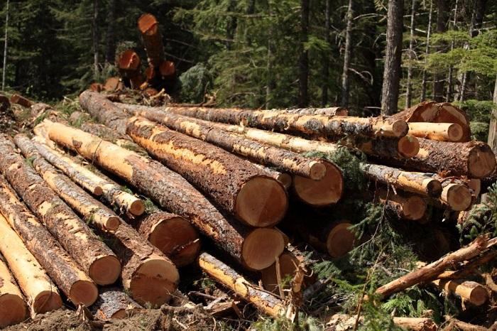 bảng giá gỗ tự nhiên