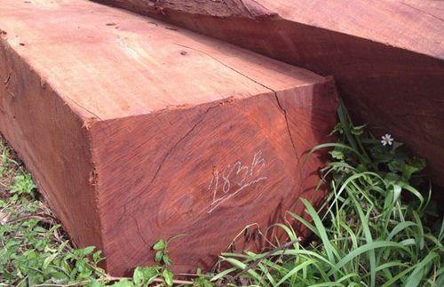 cách nhận biết gỗ thông đỏ