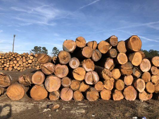 giá gỗ thông