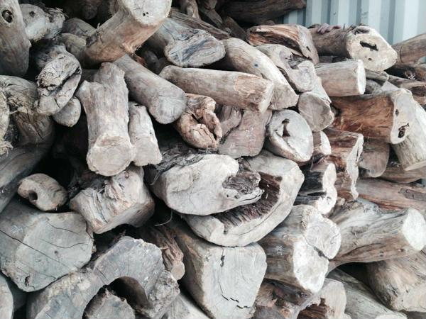 gỗ bách xanh thuộc nhóm mấy