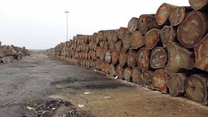 gỗ châu phi