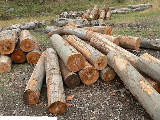 gỗ dẻ