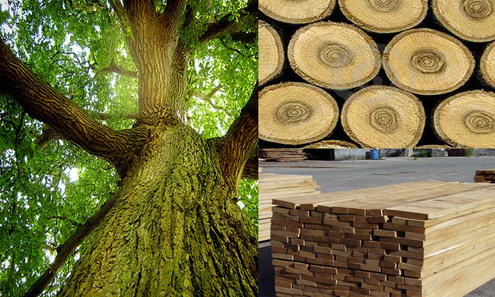 gỗ sồi nhập khẩu