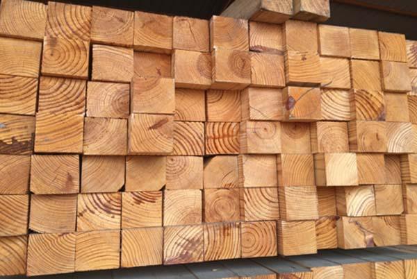 gỗ thông sấy