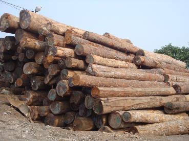 mua bán gỗ