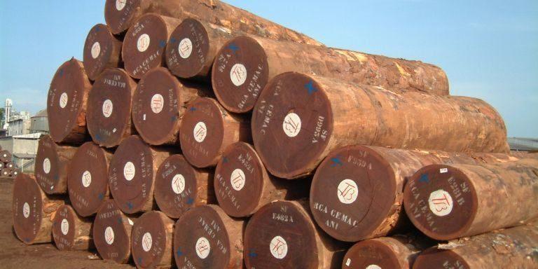 gỗ lim nam phi