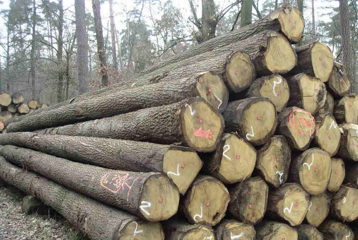 gỗ tần bì thuộc nhóm mấy