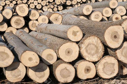 gỗ thông tiếng anh là gì