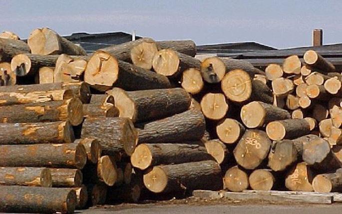 nhà cung cấp gỗ nhập khẩu