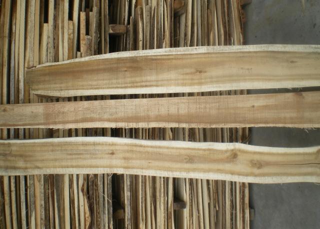 giá gỗ tràm bông vàng