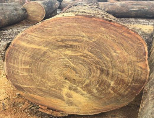 gỗ nhập khẩu từ nam phi