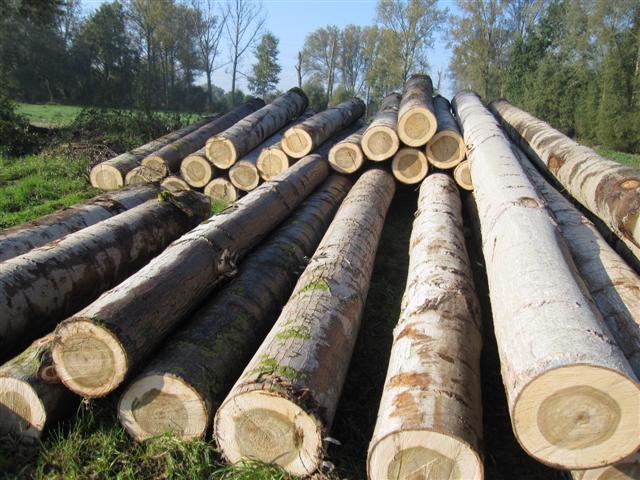 gỗ tròn