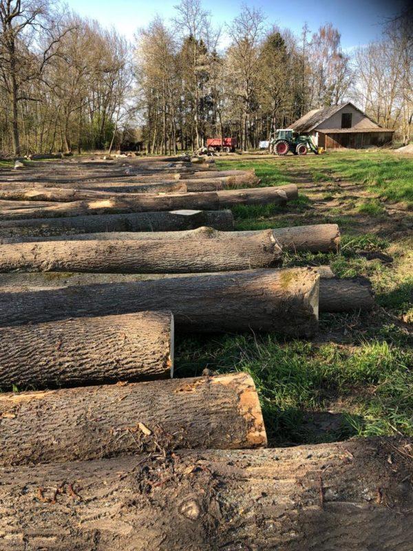 gỗ sồi nga là gỗ gì?