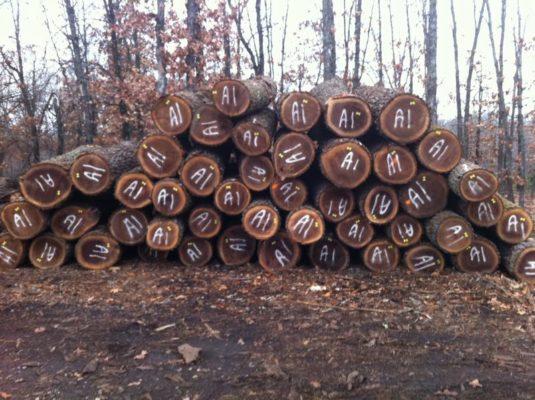 giá gỗ óc chó bao nhiêu