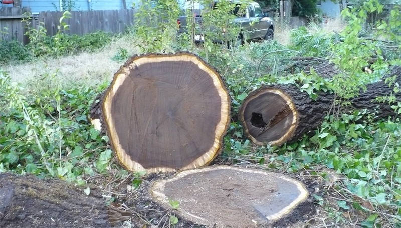 ưu điểm của gỗ óc chó