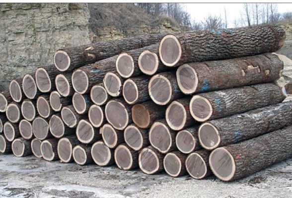 gỗ óc chó xuất xứ đâu