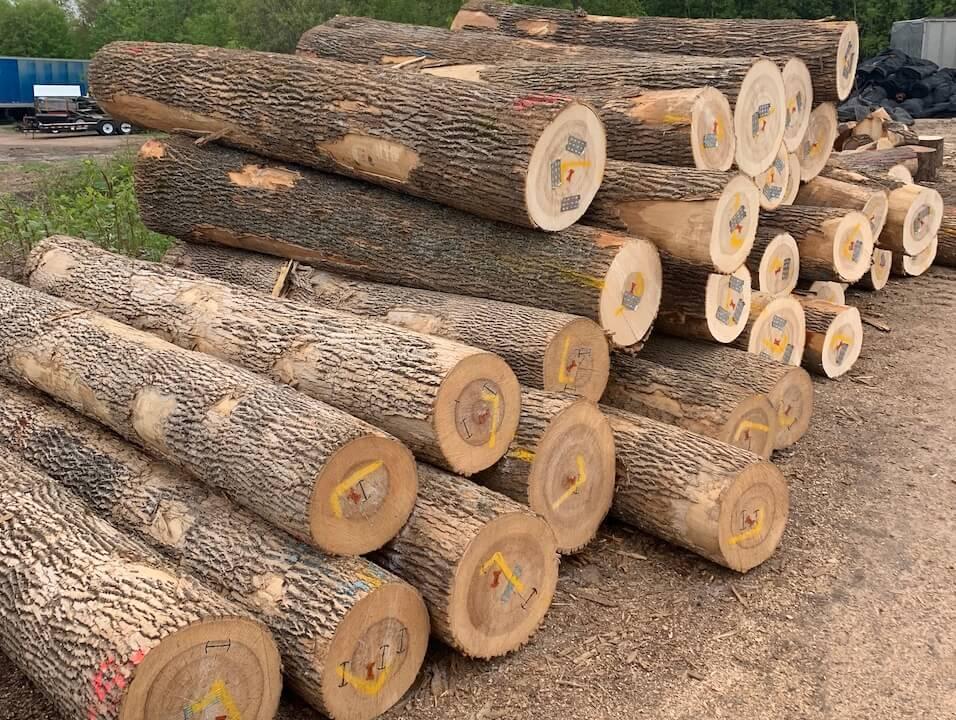 Gỗ ash là gỗ gì