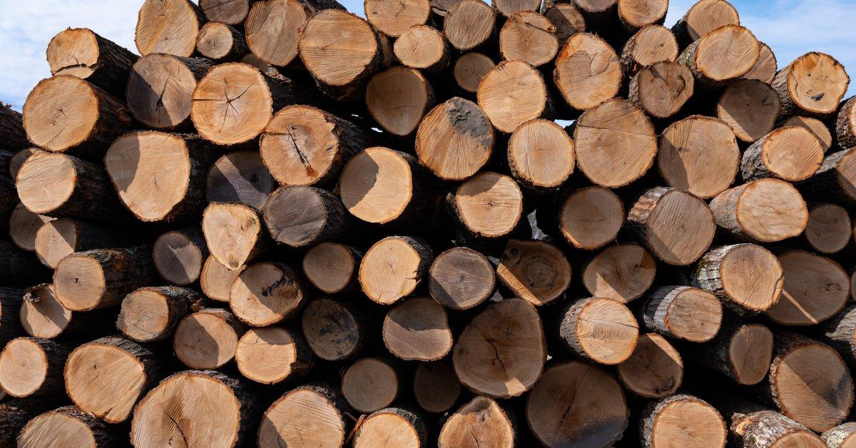 Gỗ thích (gỗ maple)
