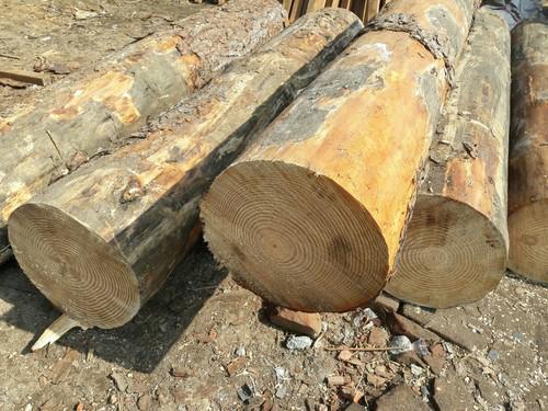 gỗ thông Mỹ nhập khẩu
