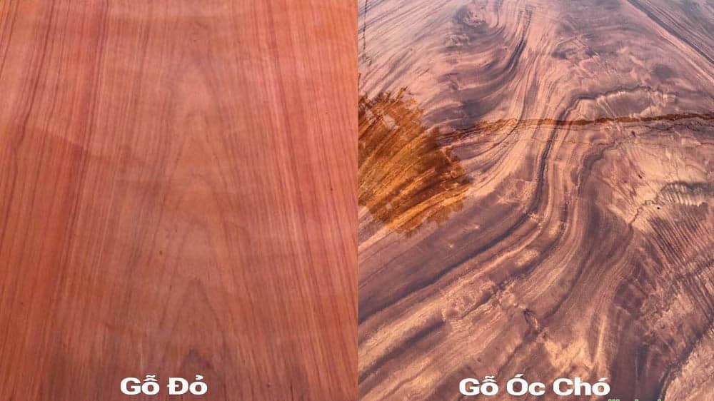 gỗ óc chó và gõ đỏ