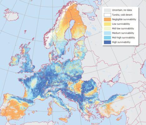 Cây dẻ gai châu Âu
